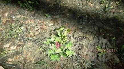 Wintergreen Berry in RDR 2