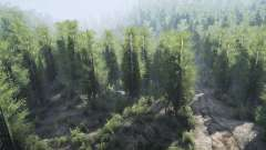Birch forest for MudRunner